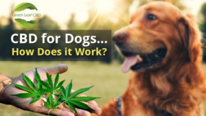 CBD Treats for Dogs Anxiety