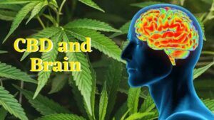 CBD and Brain