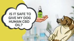 Is human CBD oil safe to give dogs