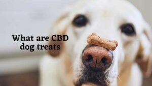 What are CBD dog treats