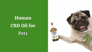 Human CBD Oil for Pets